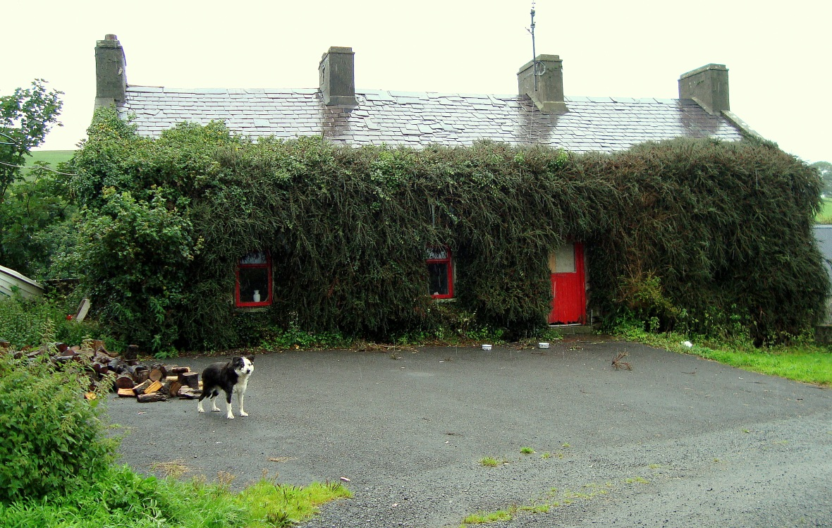 Hairy Cottage